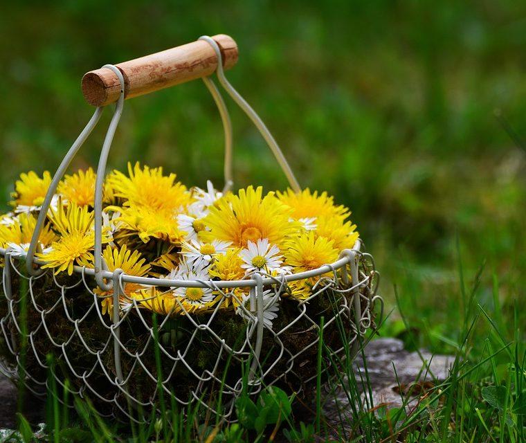 Tea Reveiw for June: Dandelion Tea